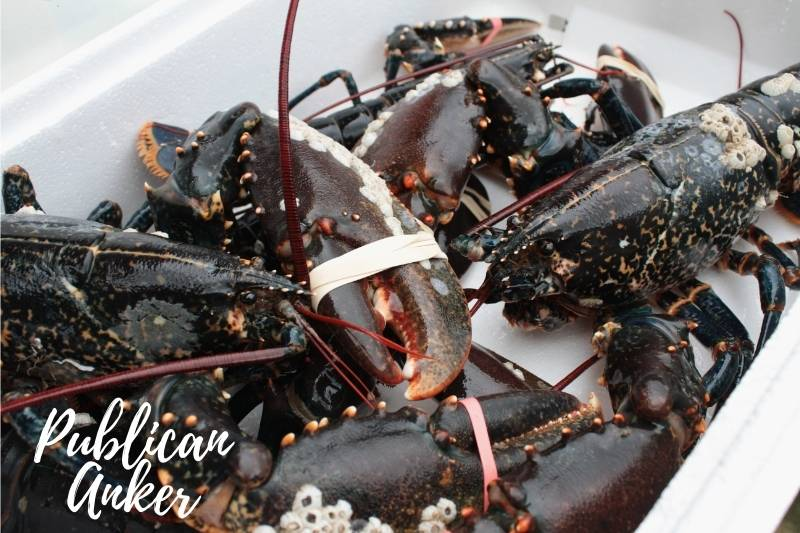 How Long Can Lobsters Stay Alive In A Cooler