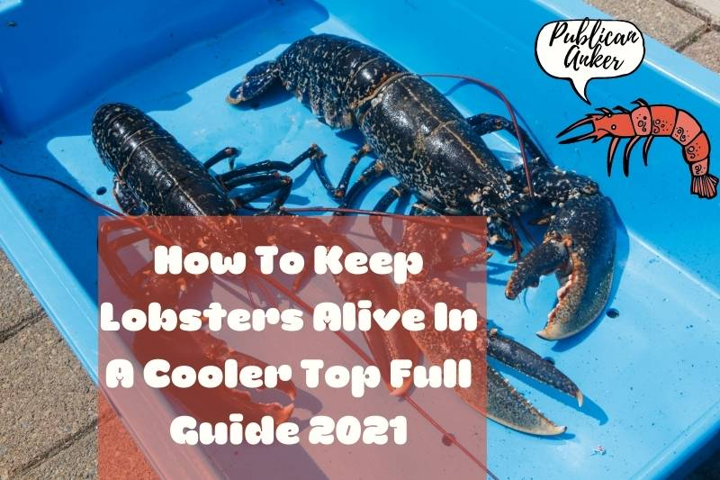 How To Keep Lobsters Alive In A Cooler Top Full Guide 2021
